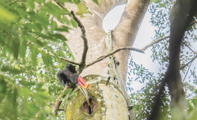 gaia-hornbills-news-3