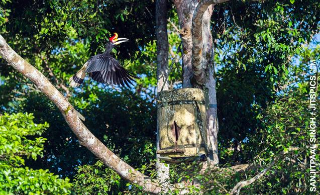 gaia-hornbills-news-1